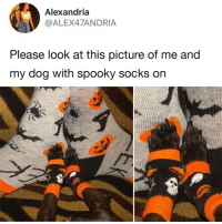 Dank, Spooky, and 🤖: Alexandria  @ALEX47ANDRIA  Please look at this picture of me and  my dog with spooky socks on ☺️