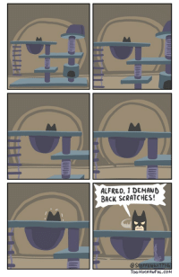 Back, Another, and Cat: ALFRED, 1 DEMAND  BACK SCRATCHES!  @STEFFENWITT  Too MuCHAWFUL.COM Yet another cat comic