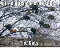 Memes, Alfred Hitchcock, and 🤖: Alfred Hitchcock presents  The Cats