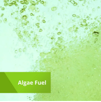 Memes, Fossil, and 🤖: Algae Fuel Algae-based fuel performed as well as fossil fuel in preliminary studies. —via Explorist