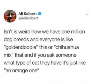 "Mine's Oreo flavoured: Ali Kolbert  @AliKolbert  Isn't is weird how we have one million  dog breeds and everyone is like  ""goldendoodle"" this or ""chihuahua  mix"" that and if you ask someone  what type of cat they have it's just like  ""an orange one"" Mine's Oreo flavoured"