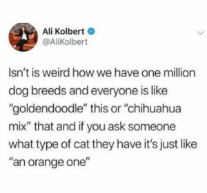 "Mine's Oreo flavoured: Ali Kolbert  @AliKolbert  Isn't is weird howwe have one million  dog breeds and everyone is like  ""goldendoodle"" this or ""chihuahua  mix"" that and if you ask someone  what type of cat they have it's just like  ""an orange one"" Mine's Oreo flavoured"