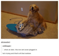 Memes, All That, and Idiot: aliciaaadani  evilblogger  what an idiot. the iron isnt even plugged in  he's trying and that's all that matters LOOK AT THIS DOGGO