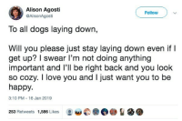 Dogs, Love, and I Love You: Alison Agosti  @AlisonAgosti  Follow  To all dogs laying down,  Will you please just stay laying down even if l  important and I'll be right back and you look  get up? I swear l'm not doing anything  so cozy. I love you and I just want you to be  happy.  3:10 PM 16 Jan 2019  253 Retweets 1,586 Likes