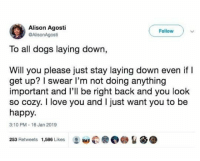 Dogs, Love, and I Love You: Alison Agosti  @AlisonAgosti  Followv  To all dogs laying down  Will you please just stay laying down even if I  get up? I swear I'm not doing anything  important and l'll be right back and you look  so cozy. I love you and I just want you to be  happy.  3:10 PM-16 Jan 2019  0圞@@%备  253 Retweets  1,586 Likes  w @animalsmeettheinternet
