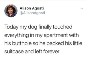 Snoopy Come Home: Alison Agosti  @AlisonAgosti  Today my dog finally touched  everything in my apartment with  his butthole so he packed his little  suitcase and left forever Snoopy Come Home