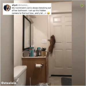 Memes, Camera, and Hell: aliyah @steeleio_  My roommate's cat is always breaking out  of her bathroom. I set up this hidden  camera to find out how and y'all.....-  @steeleio Y the hELL havent u followed @kalesaladanimals yet