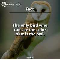 Memes, 🤖, and Com: All About Facts  Fact  The only bird who  can see the color  blue is the owl.  @aafact Owl!!! 🐦 Follow @aafact 😉 owl bird owls birds animal animals fact facts blue color colors Recovered from: Snapple.com