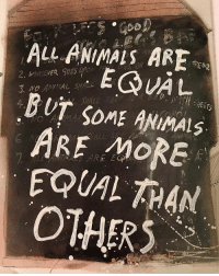 Rereading Animal Farm by Orwell.: ALL ANIMALS ARF  EITH SHEETS  BUT SOME ANiMAS  ARE MORE  EQUAL THAN  OTHERS Rereading Animal Farm by Orwell.
