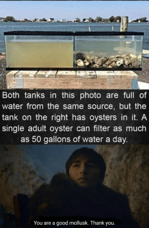 All credit to oysters by PointlessPoem MORE MEMES: All credit to oysters by PointlessPoem MORE MEMES