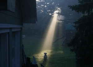 All dogs go to heaven. Clearly they come from there too: All dogs go to heaven. Clearly they come from there too