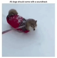 I can't stop watching this | Follow @cuteandfuzzybunch 👈 for them fuzzy memes!: All dogs should come with a soundtrack I can't stop watching this | Follow @cuteandfuzzybunch 👈 for them fuzzy memes!