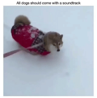Dogs, Funny, and Hilarious: All dogs should come with a soundtrack @ladbible is hilarious