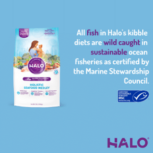 America, Halo, and Memes: All fish in Halo's kibble  diets are wild caught in  sustainable ocean  fisheries as certified by  the Marine Stewardship  Proven Sperir  Digestbity  The Proof is  in the Poop  Spet's Stew  DreamCoat  Co  www  HALO  Sensitive Stomach Cat  Council.  HOLISTIC  SEAFOOD MEDLEY  wwOLE M  CERTIFIED  SUSTAINABLE  SEAFOOD  MSC  www.msc.org  Net Wh 3th (136g  HALO We're happy to partner with MSC North America to bring your pets sustainable seafood.