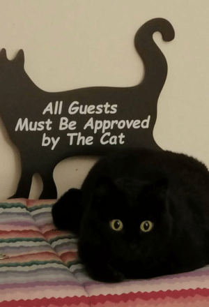 Youre out buddy: All Guests  Must Be Approved  by The Cat Youre out buddy