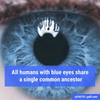 We bet you didn't see that one coming! 👀: All humans with blue eyes share  a single common ancestor  @FACTS I guff com We bet you didn't see that one coming! 👀