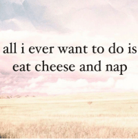 Girl Memes, Cheese, and Nap: all i ever want to do is  eat cheese and nap The truth shall set you free (@shekeepsmebalanced)