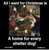Memes, 🤖, and All I Want for Christmas: All I want for Christmas is  A home for every  shelter dog!  video by scdashkon  TheGlftBox com Please pass this on to help us get this message out! Thanks.