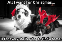Christmas, Memes, and Home: All I want for Christmas..  is for everyshelterdog to finda home Yes!