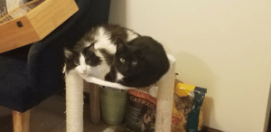 Comfortable, Food, and Life: All Life Staes  CAT FOOD  eow  10%  ured Meet my new buds! Slyvester (left) & Cilantro (right) are 9 & 10 years old and we're recently rescued from a hoarding environment. After a month they're finally comfortable roaming most of the apartment! I catch them snuggling all the time.