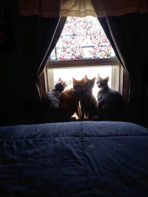 All my cats are happy its starting to be Spring. Now if the snow could stop that would be wonderful.: All my cats are happy its starting to be Spring. Now if the snow could stop that would be wonderful.