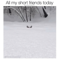 Friends, Memes, and Today: All my short friends today  @Pavlovthecorgi Wait for me I have little legs. Pup @pavlovthecorgi
