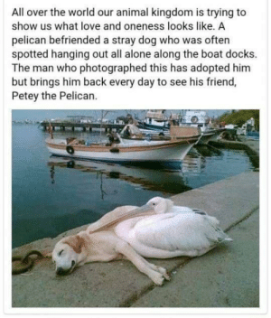 Being Alone, Aww, and Love: All over the world our animal kingdom is trying to  show us what love and oneness looks like, A  pelican befriended a stray dog who was often  spotted hanging out all alone along the boat docks.  The man who photographed this has adopted him  but brings him back every day to see his friend,  Petey the Pelican. that's aww worthy