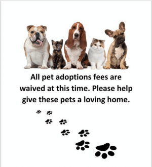 Memes, Phone, and Pets: All pet adoptions fees are  waived at this time. Please help  give these pets a loving home. May you and your pets keep safe over the next week of uncertainty.  🙏🤞🐾❤🍀 PLEASE keep track of ALL your pets!  Keep them inside, stock up supplies, have current phone numbers on all pets especially if evacuating.  (Write on collar or pet size shirt  with sharpie if you do not have $8 for a tag)  PLAN an evacuation that includes YOUR pets!  Pay for boarding if you need too.  Just be a responsible pet parent!