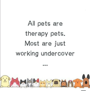All pets good: All pets are  therapy pets.  Most are just  working undercover All pets good