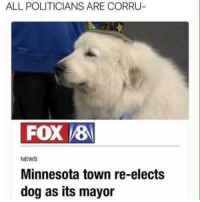 News, Http, and Minnesota: ALL POLITICIANS ARE CORRU  FOX 8  NEWS  Minnesota town re-elects  dog as its mayor Mr. Mayor via /r/wholesomememes http://bit.ly/2EVxoF0