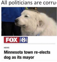 News, Home, and Minnesota: All politicians are corru-  FOX 8  NEWS  Minnesota town re-elects  dog as its mayor Found my new home.