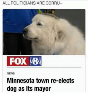 Dank, Memes, and News: ALL POLITICIANS ARE CORRU-  FOX 8  NEWS  Minnesota town re-elects  dog as its mayor make Minnesota great again by Chromozome MORE MEMES