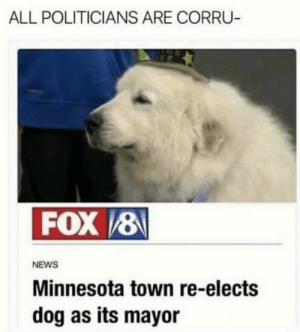 News, Tumblr, and Blog: ALL POLITICIANS ARE CORRU  FOX 8  NEWS  Minnesota town re-elects  dog as its mayor dankestmemestealer:  Goodest Guv'ner