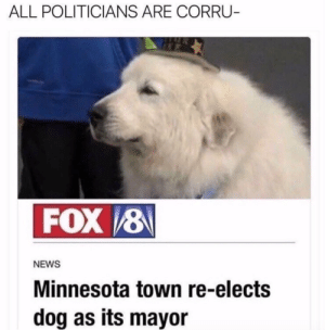 News, Tumblr, and Blog: ALL POLITICIANS ARE CORRU  NEWS  Minnesota town re-elects  dog as its mayor babyanimalgifs:  The only news I wanna see.