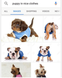 Clothes, Memes, and Puppies: ALL  puppy in nice clothes  IMAGES  SHOPPING  VIDEOS  NEWS have a blessed day everyone