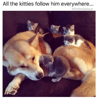 (@pablopiqasso) is a hecking awesome meme account.: All the kitties follow him everywhere  @DrSmashlove (@pablopiqasso) is a hecking awesome meme account.