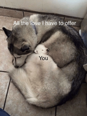 all-the-love: All the love I have to offer  You