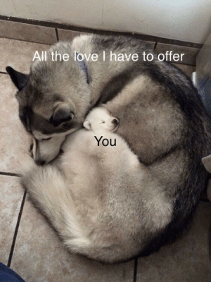 Life, Love, and All The: All the love I have to offer  You When you have that one person in your life