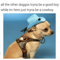 sunday doggo feels: all the other doggos tryna be a good boy  while im here just tryna be a cowboy sunday doggo feels