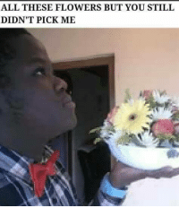 Please vote by commenting with #MemeOfTheYear: ALL THESE FLOWERS BUT YOU STILL  DIDN'T PICK ME Please vote by commenting with #MemeOfTheYear