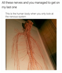 nervous: All these nerves and you managed to get on  my last one  This is the human body when you only look at  the nervous system