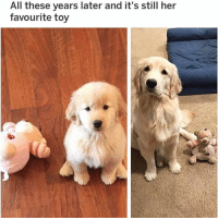 (@hilarious.ted) is the BEST animal meme page! (Reddit u-beefjyrkii): All these years later and it's still her  favourite toy (@hilarious.ted) is the BEST animal meme page! (Reddit u-beefjyrkii)