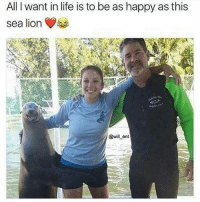 Life, Memes, and Happy: All want in life is to be as happy as this  sea lion  @will ent Follow @nodisnigga for more hilarious memes. 👣👣👣 @nodisnigga @nodisnigga @nodisnigga