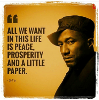 👌🏼 mood tribetuesday atribecalledquest atcq qtip phife alirasheedmuhammad peace prosperity paper tribecalledquest ripphife tuesday tacotuesday phifedawg music quotes hiphop lyrics rap vibe: ALL WE WANT  IN THIS LIFE  IS PEACE,  PROSPERITY  AND A LITTLE  PAPER  Q-Tip 👌🏼 mood tribetuesday atribecalledquest atcq qtip phife alirasheedmuhammad peace prosperity paper tribecalledquest ripphife tuesday tacotuesday phifedawg music quotes hiphop lyrics rap vibe