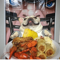 Can, All, and You: All you can eat booffet  3bulldogges