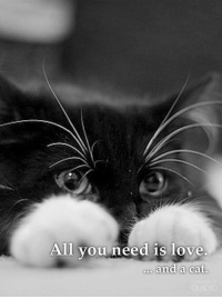 Cats, Memes, and 🤖: All you need is love  and a cat.  cuoio All you need is love and a cat.