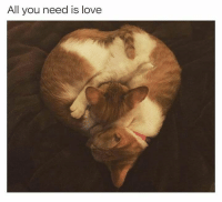 Fresh, Funny, and Love: All you need is love Funny Fresh and Fantastic Animal Memes to Get You Going - 17