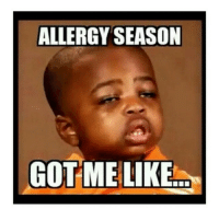Im in bed suffering just posting 😩: ALLERGY SEASON  GOT ME LIKE Im in bed suffering just posting 😩
