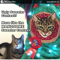 Office Cat Charles is the real winner of this holiday sweater contest! #LOLcats: Alley Cat Allies  Ugly Sweater  Contest  More like the  HANDSOME  Sweater  Contest!  www.alleycat.org Office Cat Charles is the real winner of this holiday sweater contest! #LOLcats