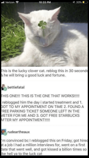 Dank, Friday, and Memes: alli Verizon  10:33 PM  33%  This is the lucky clover cat. reblog this in 30 seconds  & he will bring u good luck and fortune.  bettiefatal  HIS ONE!!! THIS IS THE ONE THAT WORKS!!!!!  reblogged him the day i started treatment and 1.  GOT TO MY APPOINTMENT ON TIME 2. FOUND A  REE PARKING TICKET SOMEONE LEFT IN THE  ETER FOR ME AND 3. GOT FREE STARBUCKS  rudeartheaux  m convinced bc I reblogged this on Friday, got hiredc  t a job I had a million interviews for, went on a first  ate that went well, and got kissed a billion times so  ke hell ya to the luck cat Repost by lolethanlol MORE MEMES